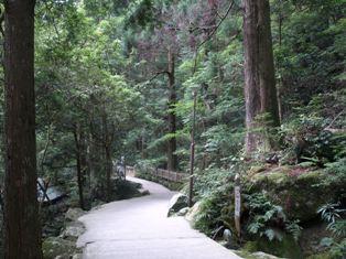 滝への道12