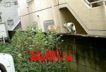 20060620_tama01.jpg