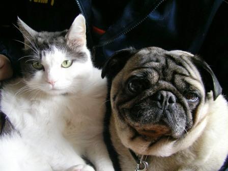 仲良し?なんだけど、猫のふてくされた顔は、何をものがたるのやら・・