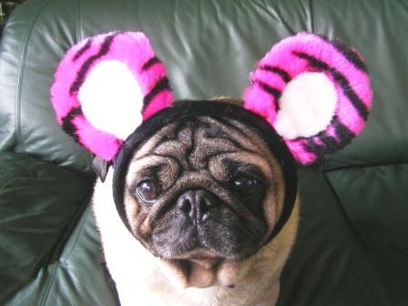 ピンクのトラに見えるかな??