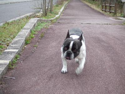 お散歩お散歩
