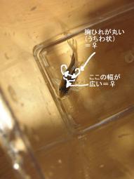 KIF_3459.jpg