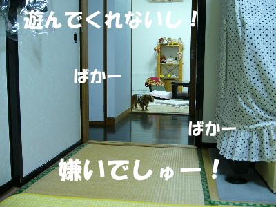 P1090454-1.jpg