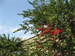 赤い実と石の蔵