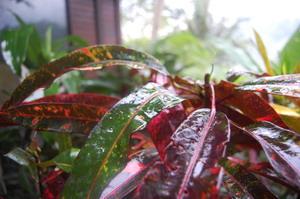11月の雨