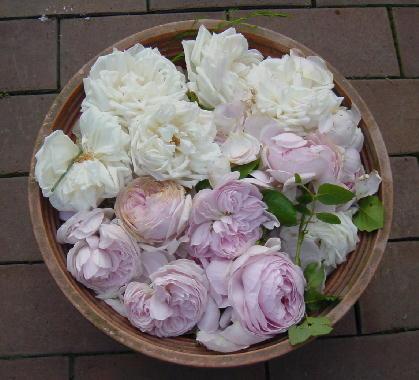 バラの花がら
