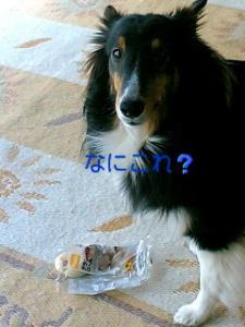 070412_0951~01001.jpg