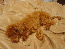 ローラン毛布