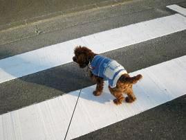 ゆっくり歩行です