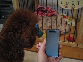 新しい携帯!