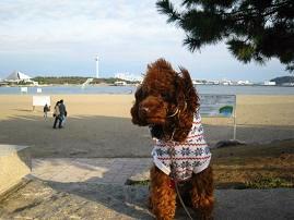 海の公園にお散歩