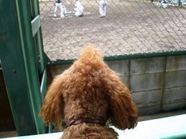 草野球の試合の応援