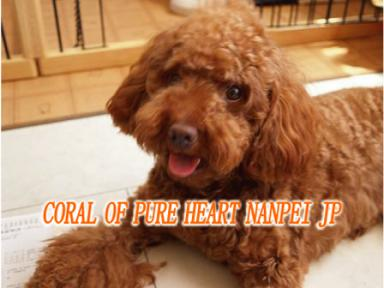 CORAL OF PURE HEART NANPEI JP