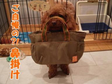 いぬきもの付録のバッグ