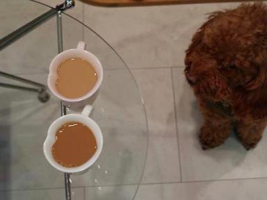 初コーヒー