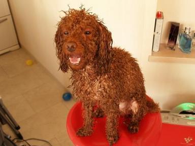 シャンプーで別犬