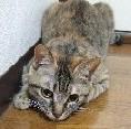 愛猫<獲物狙い中>