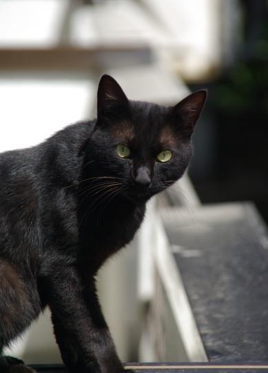 黒猫<バロン>
