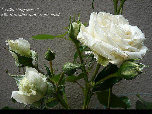 P1010328-sh0506.jpg