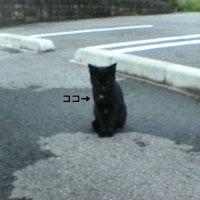 黒猫白胸毛