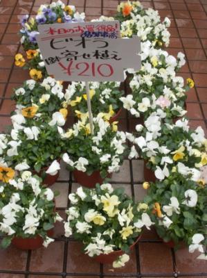 花屋001