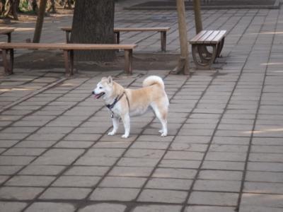 駒沢公園ドッグラン001