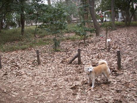 林試の森公園001