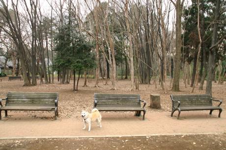林試の森公園002