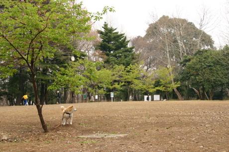 林試の森公園006