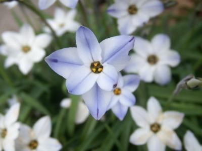 野の花04