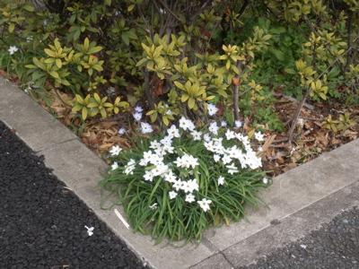 野の花05