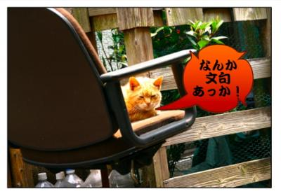 どら猫02