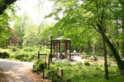 林試の森公園の池01