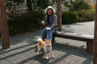 四国柴犬01