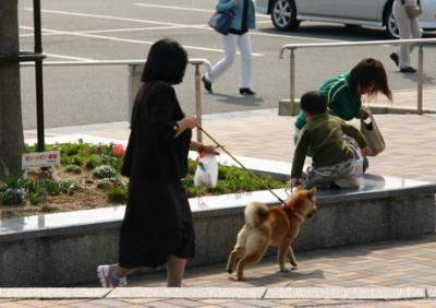 四国柴犬03