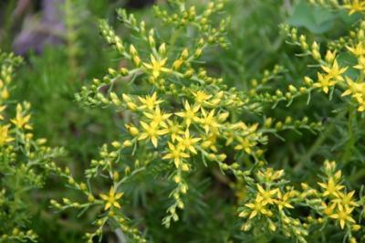 黄色の花01