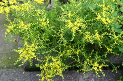 黄色の花02