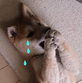 マックの涙