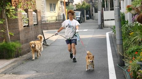 柴犬友だち013