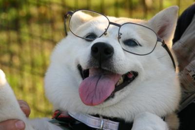 眼鏡マック02