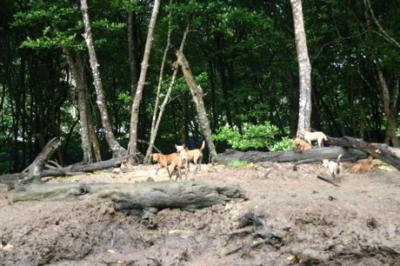 マングローブの森の生物07