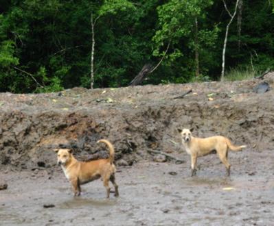 マングローブの森の生物08