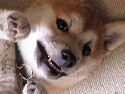 子犬マック01