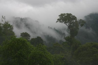 熱帯ジャングル02