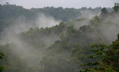 熱帯ジャングル01