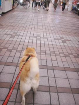 マック武蔵小山商店街散歩02