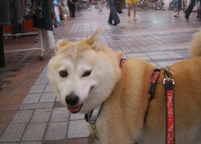 マック武蔵小山商店街散歩03
