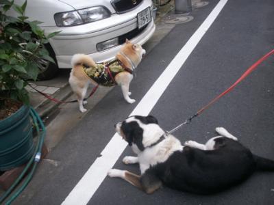 商店街お散歩03