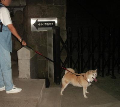 深夜のお散歩01