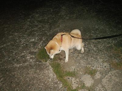 深夜のお散歩02